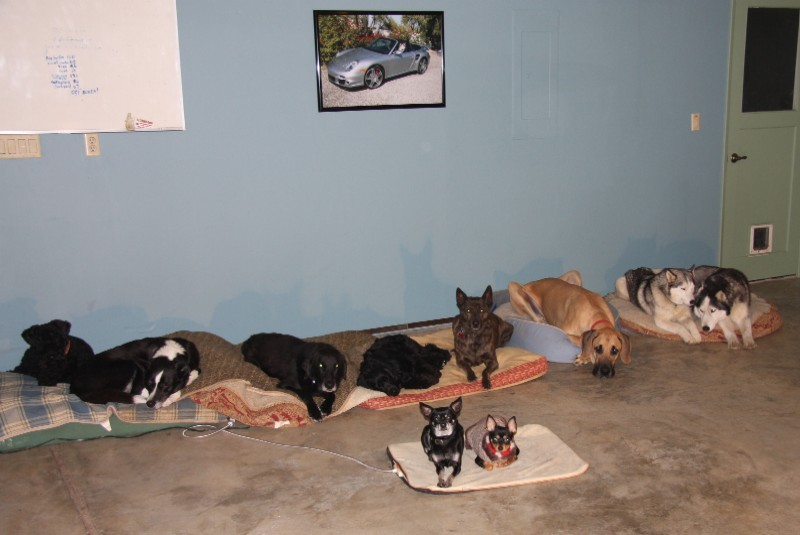 Ten dogs staying on command-image.
