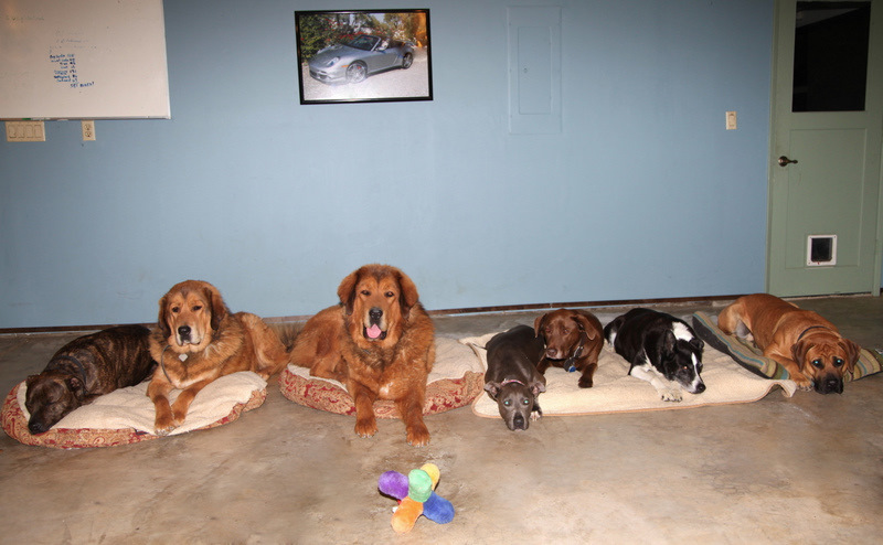 "Seven dogs on ""Down-Stay"" in Roseville-image."