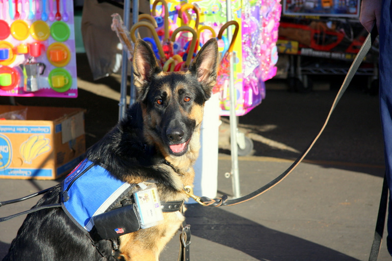 German Shepherd and service dog trainers in Lancaster-image.