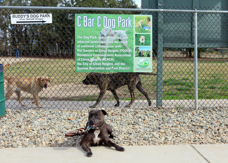 Dog parks in Monterey ,CA-image.