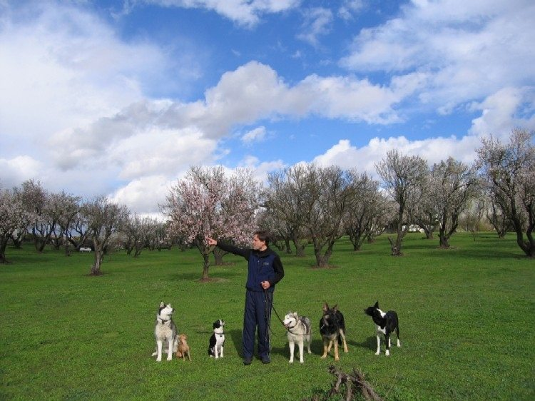 The right choice for dog training in Redding -image.
