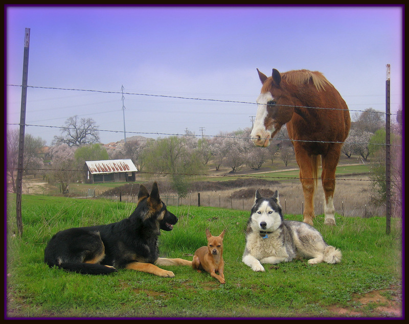 Roseville,Rocklin,Citrus Heights German Shepherd Trainers and Training-image.