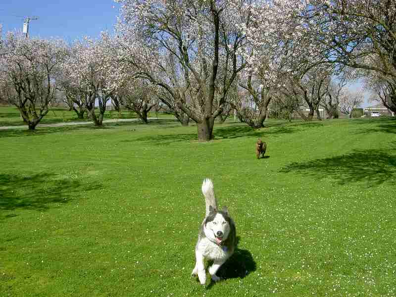 Superdog is the leader in Off-Leash Obedience for Grass Valley -image.