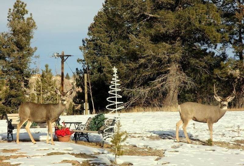 deer in colorado image
