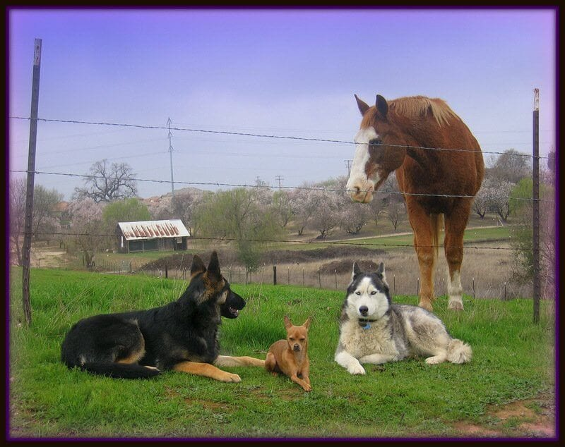Horse and dogs that are trained to assist those with disabilities.