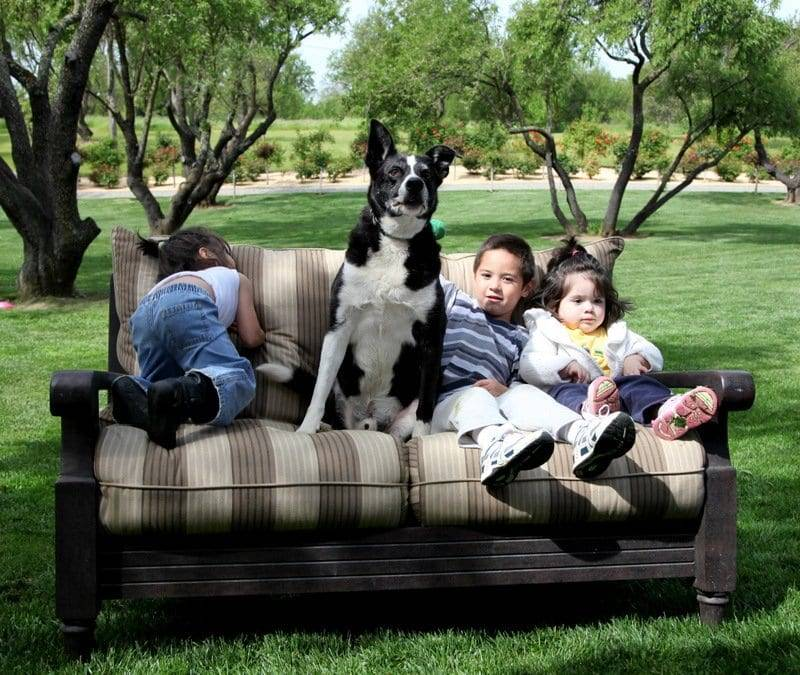 trained border collie image